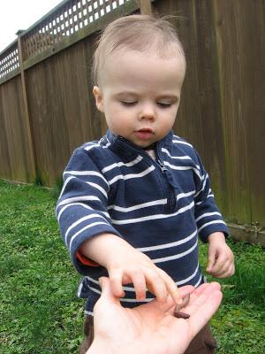 Backyard Bug Adventure