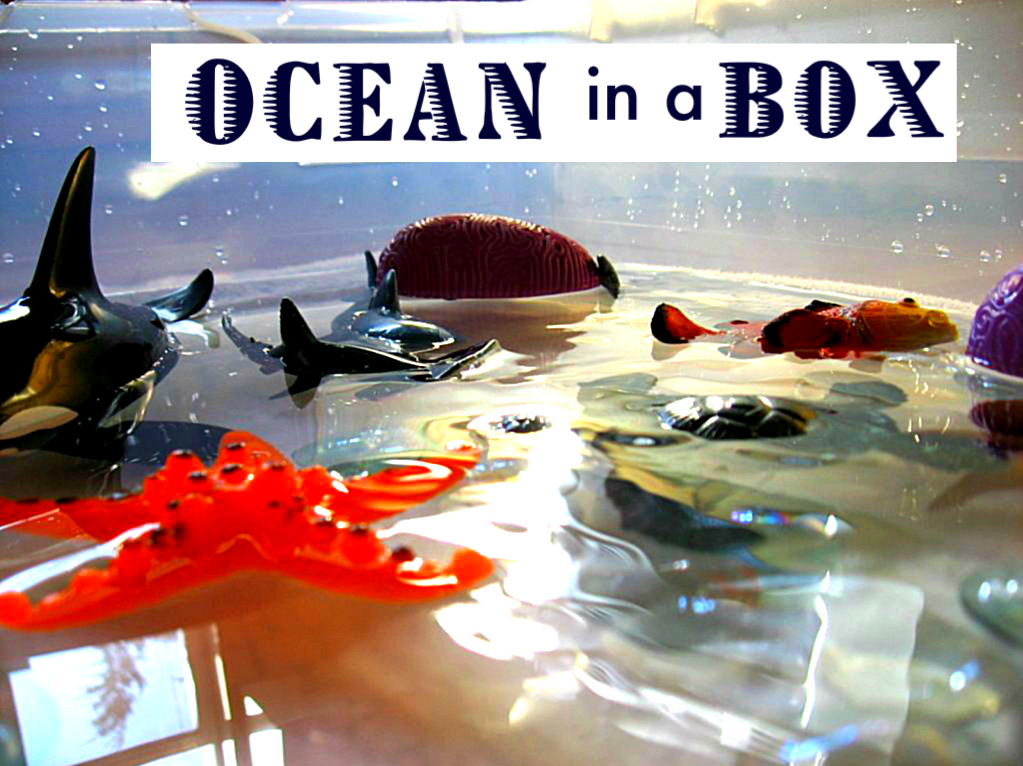 ... time for flash cards : Sea Animals Science Activities For Preschoolers