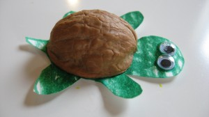 Walnut Shell Turtle