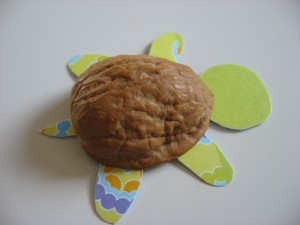 Walnut Shell Turtles