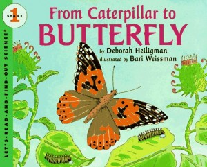 From Cateroillar to Butterfly
