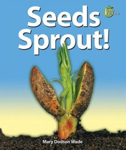 Seeds Sprout