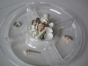 Preschool Shell Sorting Activity