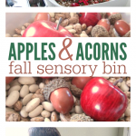 Fall Sensory Bin with Apples & Acorns!