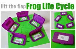 Frog Life Cycle Craft