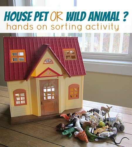 house pet or wild animal sorting activity