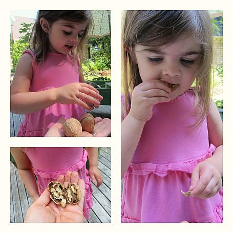walnut tasting