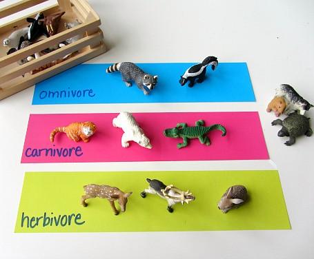 carnivore herbivore omnivore sorting