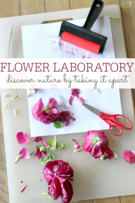 Flower Lab – Explore With Nature Activity