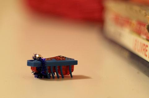 hex bug champion