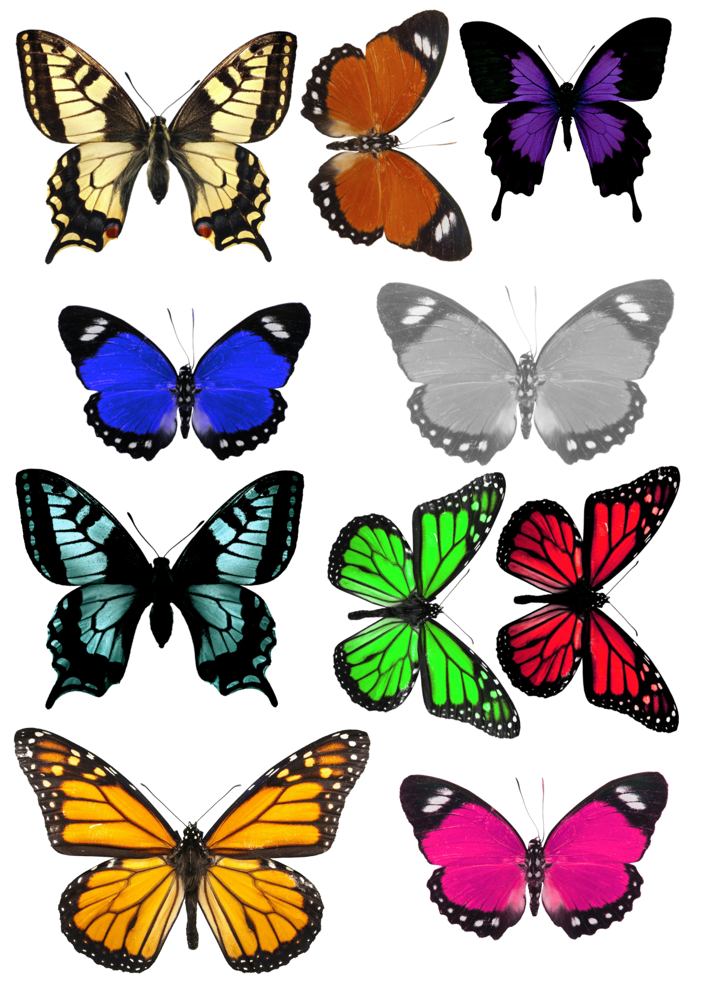 Slobbery image pertaining to printable butterflies