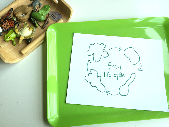 fill in the blank life cycle of frog