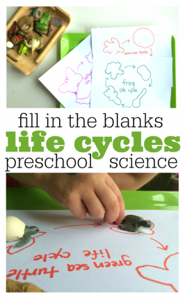 Fill In The Blank Life Cycles – Preschool Science