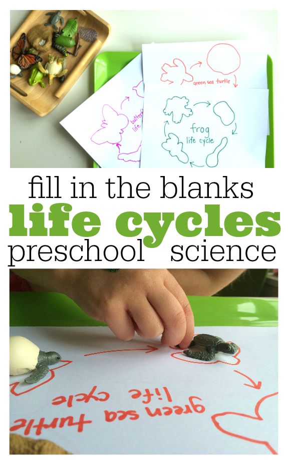 fill in the blank life cycles for kids