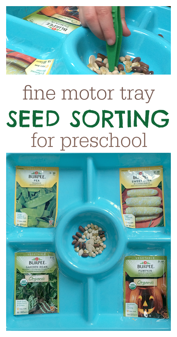 Seed Sorting Activity Tray