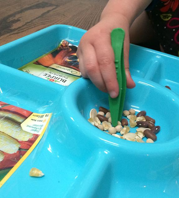tweezing seeds