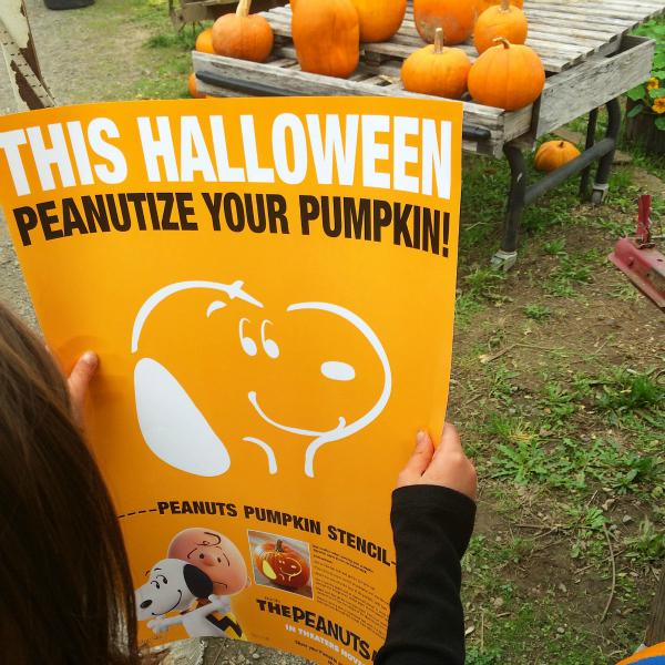 pumpkin patch v