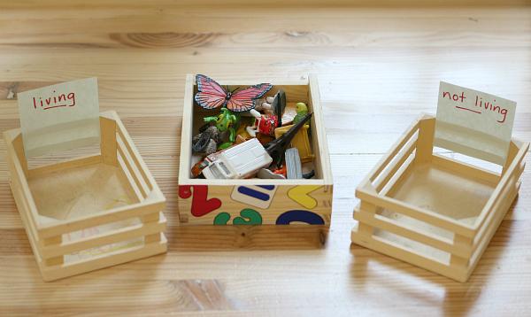 preschool science sorting tray