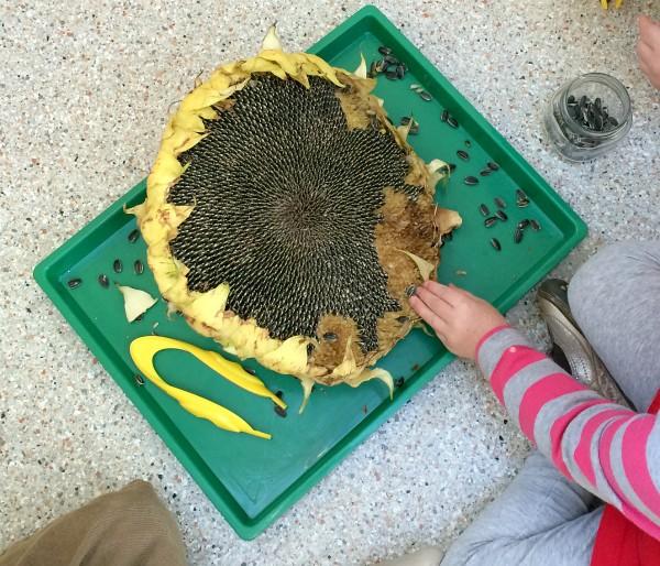 Preschool Science Center - Science Activities For 3-year ...