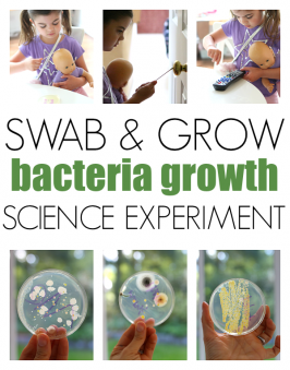 Swab & Grow – Bacteria Growth Experiment