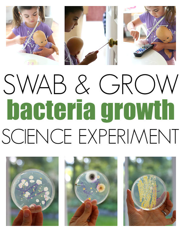 BACTERIA GROWTH SCIENCE EXPERIMENT FOR SCIENCE FAIR