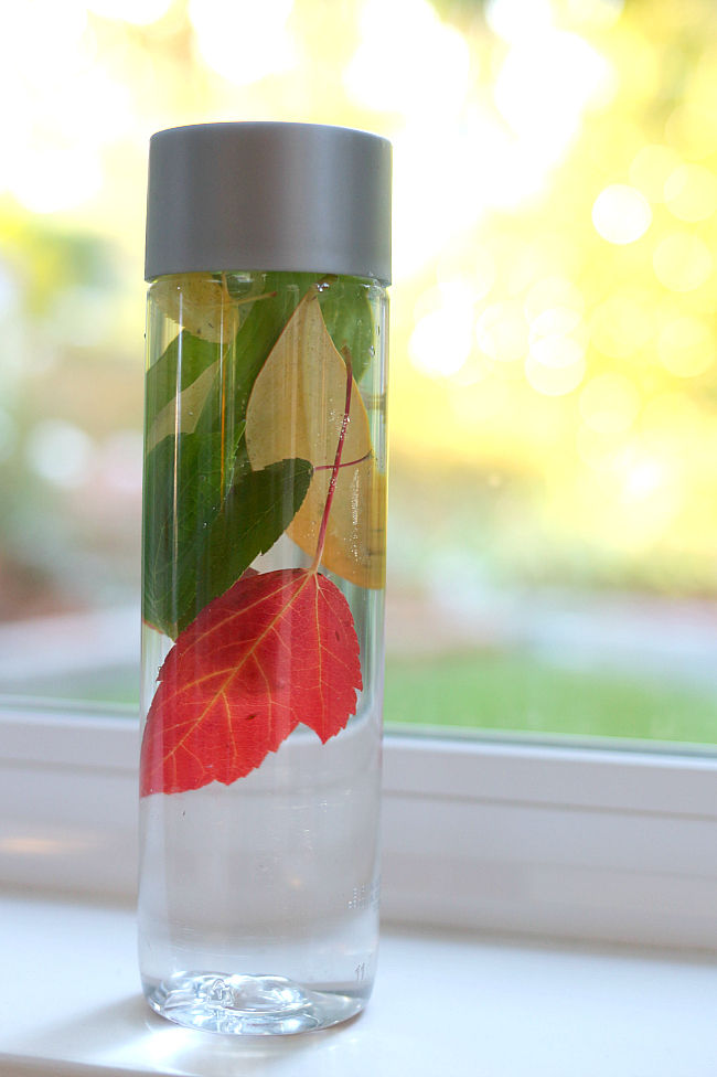 fall-nature-bottle-preschool-science-for-kids