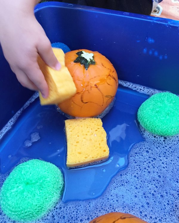 washing pumpkins at preschool