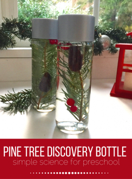 Pine Tree Discovery Bottles – Preschool Science