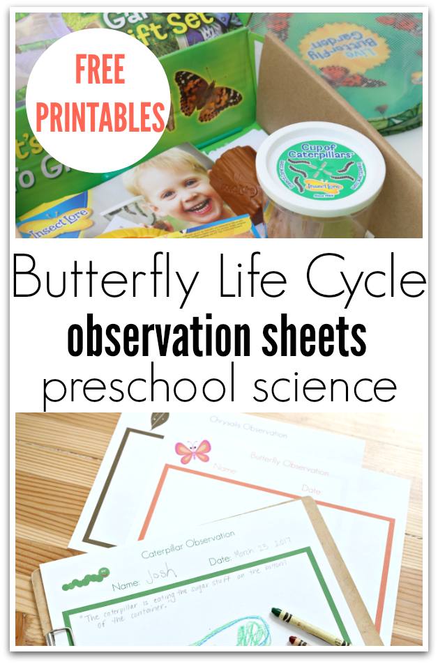 Butterfly life cycle observation sheets