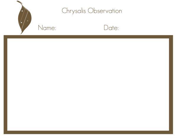 chrysalis image
