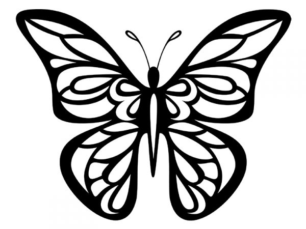 butterfly symmetry