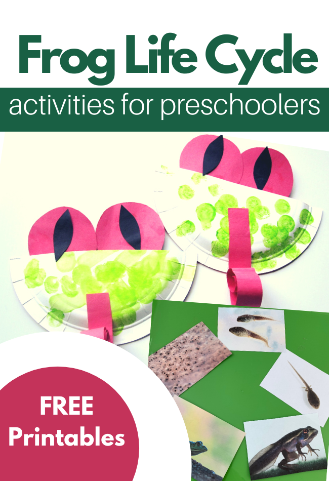 Frog Life Cycle Activities For Preschoolers No Time For Flash Cards