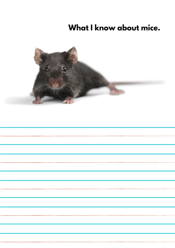 what do you know about mice science activity for preschool and kindergarten